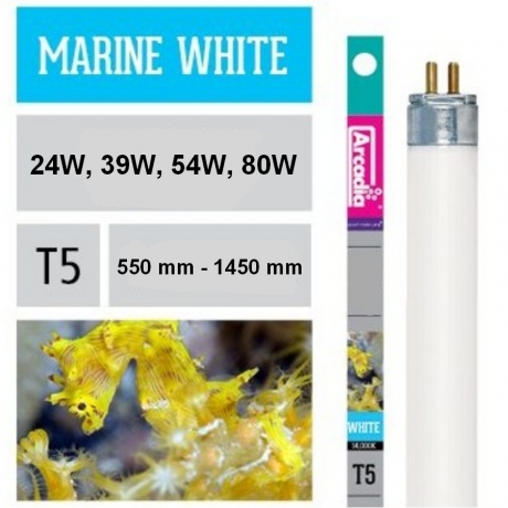 Arcadia T5 Marine White