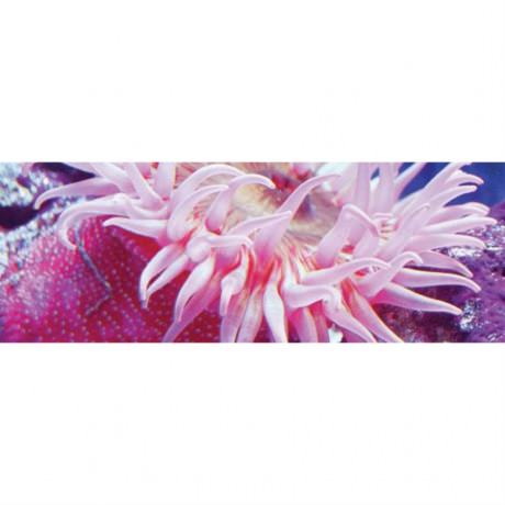 Лампа T5 Marine Pink