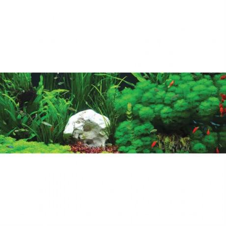 Arcadia Freshwater подчеркивают зеленые оттенки растений
