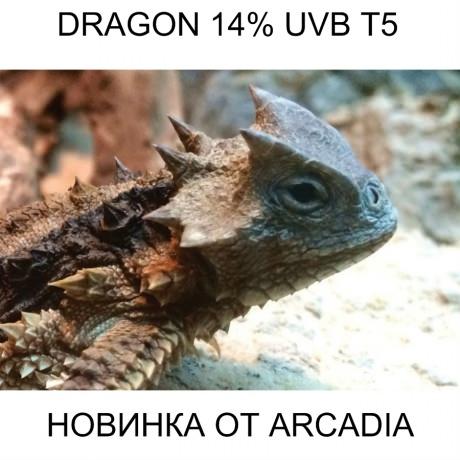 Arcadia D3 Dragon T5 14% UVB