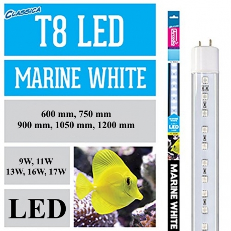 Arcadia Led T8 Marine White