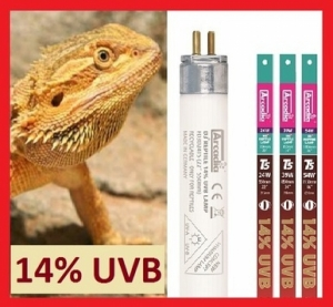 Лампа Arcadia D3 Dragon T5 14% UVB