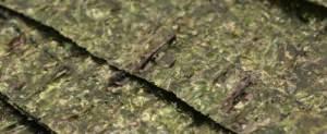 A LA CARTE GREEN SEAWEED ЗЕЛЕНЫЕ ВОДОРОСЛИ