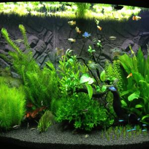 Аквариум под J5 Plant Pro